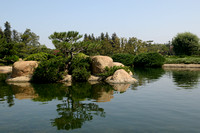 One of the Little Islands in the Pond