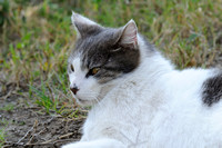 Matisse - - the laziest cat on the block.......