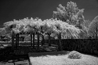 Infrared (IR) from The Japanese Garden