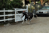 How to make the camera look bad! Unsolicited FREE play of our horses & dog in the arena.....