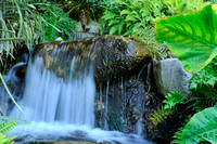 Waterfall in the Jungle Garden
